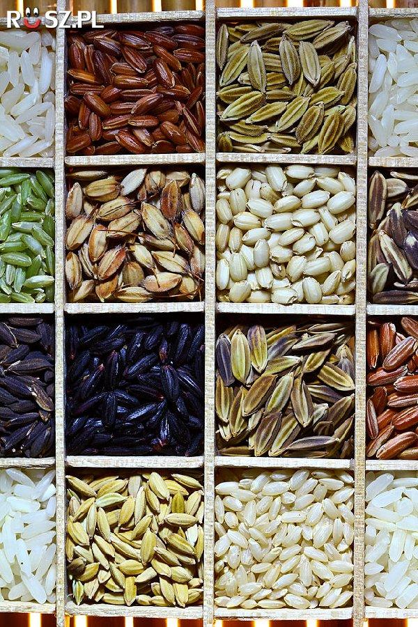 Ile jest gatunków Ryżu ?