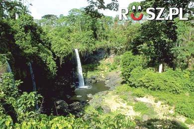 Ile procent powierzchni ziemi zajmują tropikalne lasy deszczowe?