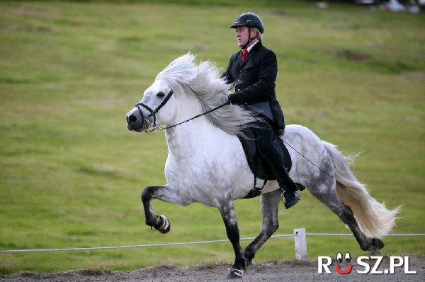 Z jaką prędkością galopował najszybszy koń świata?