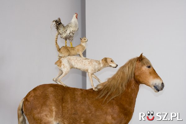 """Ile ssaków jest w instalacji K.Kozyry  """"Piramida zwierząt"""" ?"""