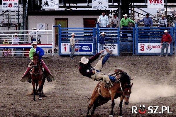 Od którego roku rodeo jest oficjalnym sportem stanu Texas ?