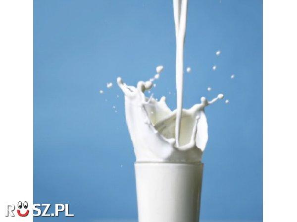 Ile litrów wody musi wypić krowa aby wytworzyć 1 litr mleka ?