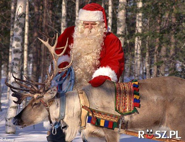 Ile reniferów ciągnie zaprzęg św. Mikołaja?