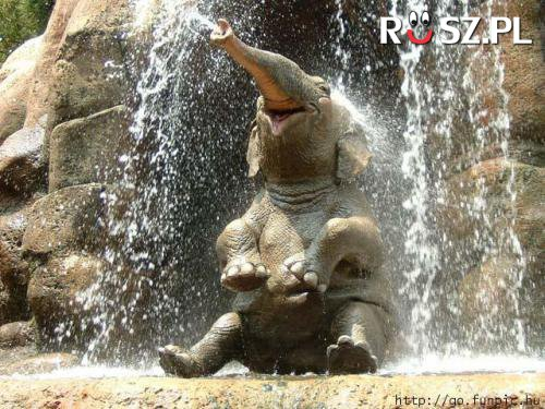 Ile litrów wody wypijaj dziennie słoń afrykański.?