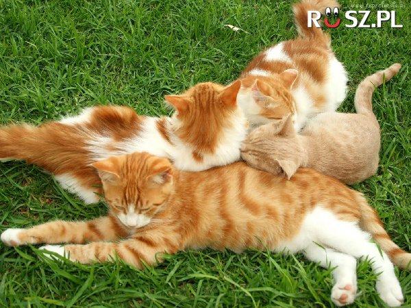 Ile jest kotów?