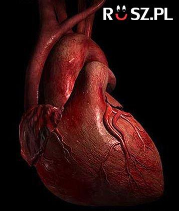 Ile razy bije serce w czasie całego życia człowieka?