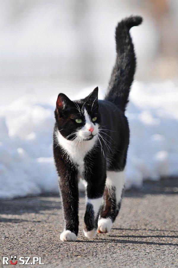Ile lat żył najstarszy kot?
