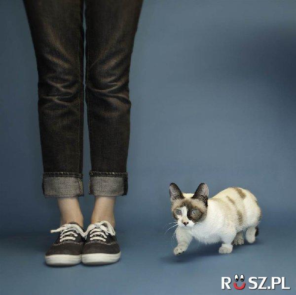 Ile cm wysokości ma ten kot?
