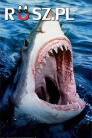 ile zębów ma ten żarłacz biały