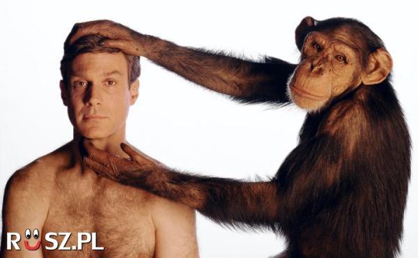 W ilu procentach nasze DNA pokrywa się z kodem genetycznym szympansa?