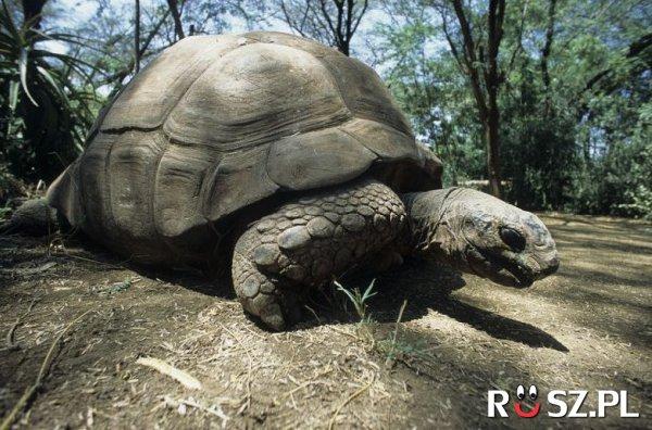 Ile lat żył najstarszy żółw świata?