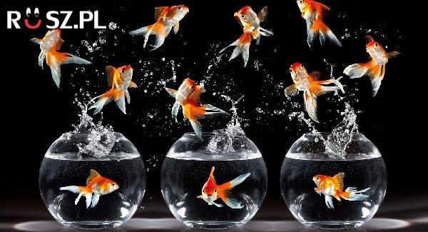 Ile jest ryb?