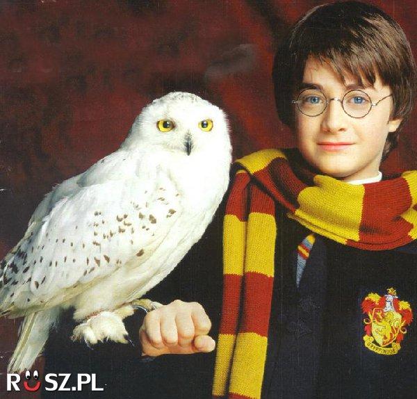 Ile sów grało rolę Hedwigi w filmach o Harrym Potterze ?