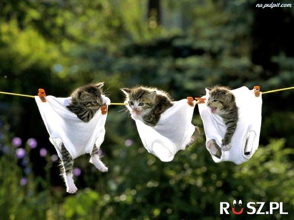 Ile jest par kociaków?
